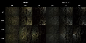 PBR Texture Scan - Tree Bark